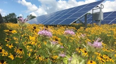 Community solar can be pollinator friendly and support local agriculture. Photo credit: Fresh Energy