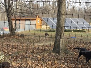 Dogs at Chilbrook Kennels in Harpers Ferry, West Virginia, play in front of a ground-mounted solar PV array