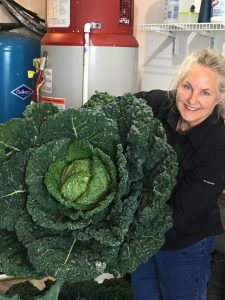woman holding a very large cabbage
