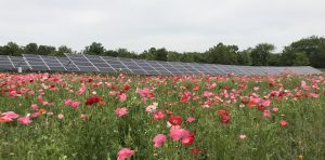 solar and field of flowers